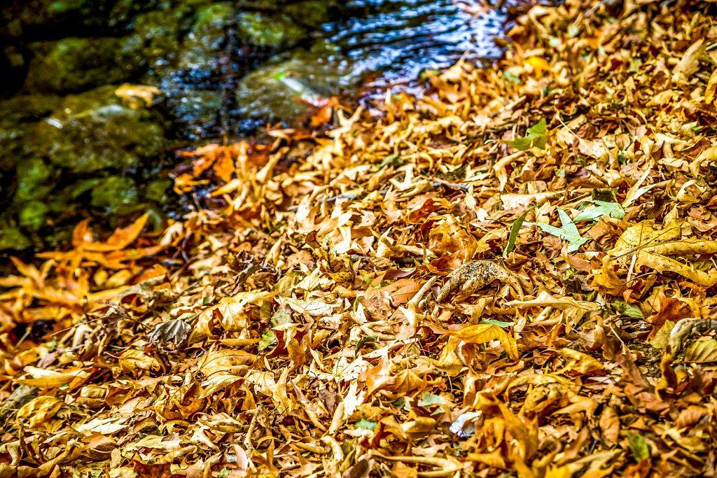 Auttumn Leaves